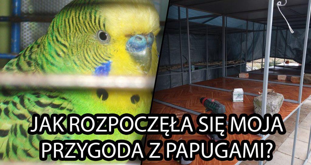 Jak rozpoczęła się moja przygoda z papugami?