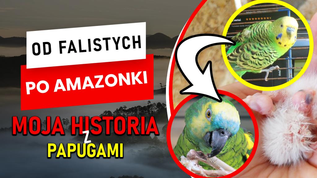 Jak rozwinąłem hodowlę papug przez 6 lat? Moja historia z papugami